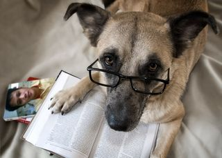 Marmar_dog_reading_the_book_1ddvkhshi