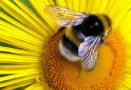 Bee_2_aftereffects_2