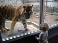 Zoo_sam_and_tiger